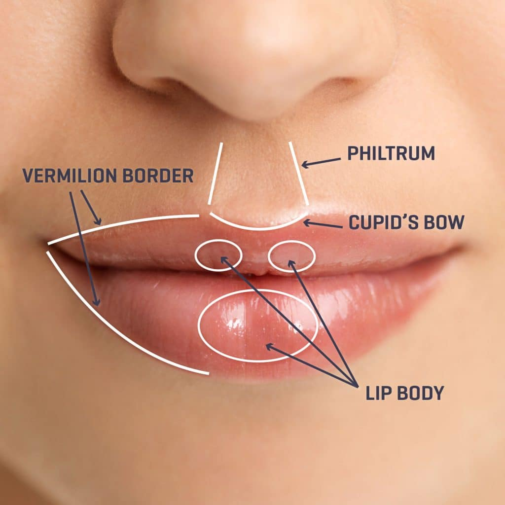 Lip Diagram